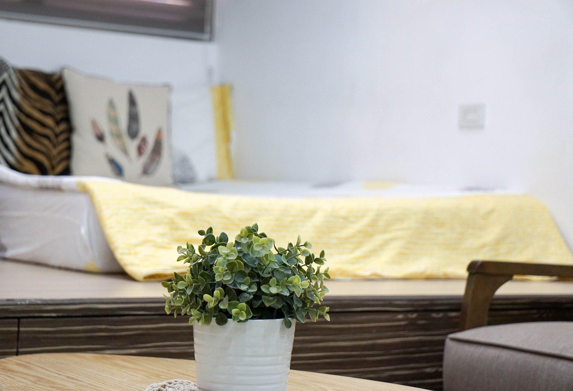 Světlá ložnice rostlina