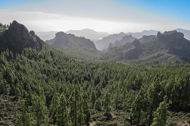 les na kanárských ostrovech