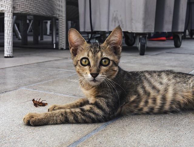 kočka u švába